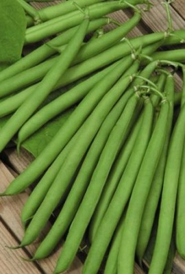 100-Seeds-Top-Crop-Sting-less-Bush-Beans-This-is-an-heirloom-variety-dating-back-to-1950-Medium-green-AAS-winner-heavy-yielding-and-an-early-producer-Fine-quality-Average-50-days-by-Seeds-and-Things-0-0