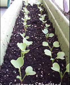 25K-Organic-Seeds-Bulk-Surplus-Heirloom-Variety-Pack-Grow-Guarantee-25000-Vegetable-Seeds-Non-GMO-95-Germination-Rates-0-1