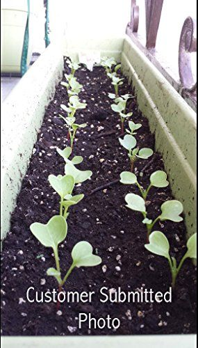25K-Organic-Seeds-Bulk-Surplus-Heirloom-Variety-Pack-Grow-Guarantee-25000-Vegetable-Seeds-Non-GMO-95-Germination-Rates-0-1