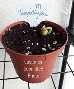 25K-Organic-Seeds-Bulk-Surplus-Heirloom-Variety-Pack-Grow-Guarantee-25000-Vegetable-Seeds-Non-GMO-95-Germination-Rates-0-2