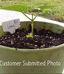 25K-Organic-Seeds-Bulk-Surplus-Heirloom-Variety-Pack-Grow-Guarantee-25000-Vegetable-Seeds-Non-GMO-95-Germination-Rates-0-3