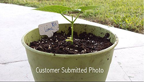 25K-Organic-Seeds-Bulk-Surplus-Heirloom-Variety-Pack-Grow-Guarantee-25000-Vegetable-Seeds-Non-GMO-95-Germination-Rates-0-3