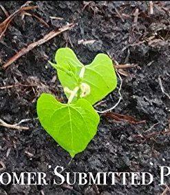25K-Organic-Seeds-Bulk-Surplus-Heirloom-Variety-Pack-Grow-Guarantee-25000-Vegetable-Seeds-Non-GMO-95-Germination-Rates-0-4