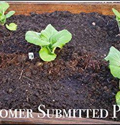 25K-Organic-Seeds-Bulk-Surplus-Heirloom-Variety-Pack-Grow-Guarantee-25000-Vegetable-Seeds-Non-GMO-95-Germination-Rates-0-5