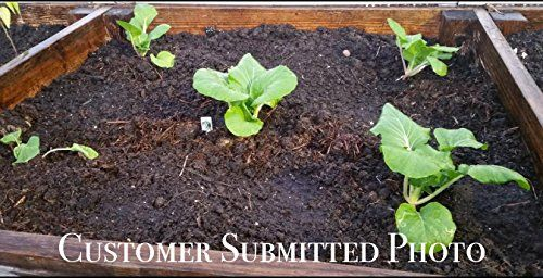 25K-Organic-Seeds-Bulk-Surplus-Heirloom-Variety-Pack-Grow-Guarantee-25000-Vegetable-Seeds-Non-GMO-95-Germination-Rates-0-5