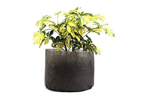 5-Pack-3-Gallon-Fabric-Grow-Bags-10-Round-X-8-Tall-Ruths-Tree-Farm-Fabric-Pots-0-1