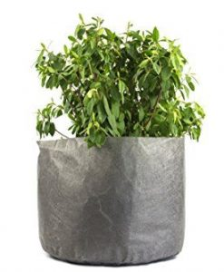 5-Pack-3-Gallon-Fabric-Grow-Bags-10-Round-X-8-Tall-Ruths-Tree-Farm-Fabric-Pots-0-3