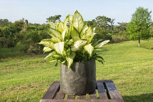 5-Pack-3-Gallon-Fabric-Grow-Bags-10-Round-X-8-Tall-Ruths-Tree-Farm-Fabric-Pots-0-5