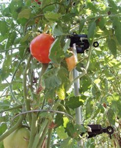 A-6-Pack-Tomato-Ring-For-2100Tomato-Cage-Tomato-CagesTomato-Support-Model-TR6-Home-Outdoor-Store-0-0