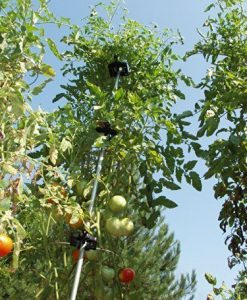 A-6-Pack-Tomato-Ring-For-2100Tomato-Cage-Tomato-CagesTomato-Support-Model-TR6-Home-Outdoor-Store-0-1