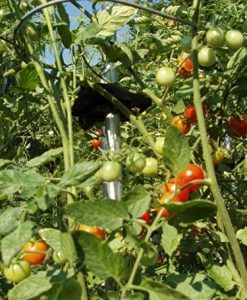 A-6-Pack-Tomato-Ring-For-2100Tomato-Cage-Tomato-CagesTomato-Support-Model-TR6-Home-Outdoor-Store-0-3