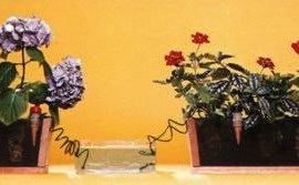 Blumat-Self-Watering-Probes-for-Vacation-Watering-set-of-5-0-1