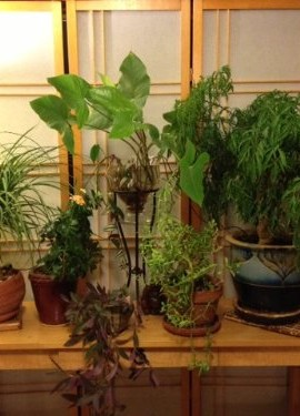 Blumat-Self-Watering-Probes-for-Vacation-Watering-set-of-5-0-4