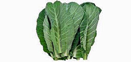 Collard-Greens-Seeds-Georgia-Southern-Heirloom-Organic-50-Seeds-Non-Gmo-0-1