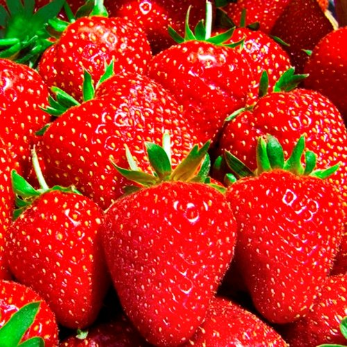 Everbearing-Day-Neutral-Eversweet-Bare-Root-Strawberry-Plants-BEST-BERRY-Specific-Non-GMO-Strawberries-ONLY-by-Mr-Stacky-0