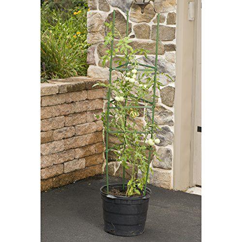 Gardeners-Blue-Ribbon-Ultomato-Tomato-Plant-Cage-0-0