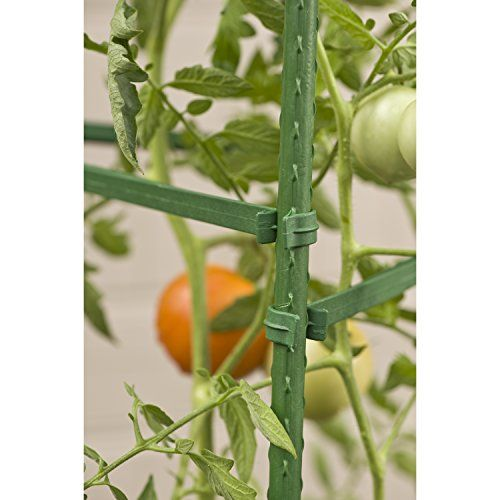 Gardeners-Blue-Ribbon-Ultomato-Tomato-Plant-Cage-0-1
