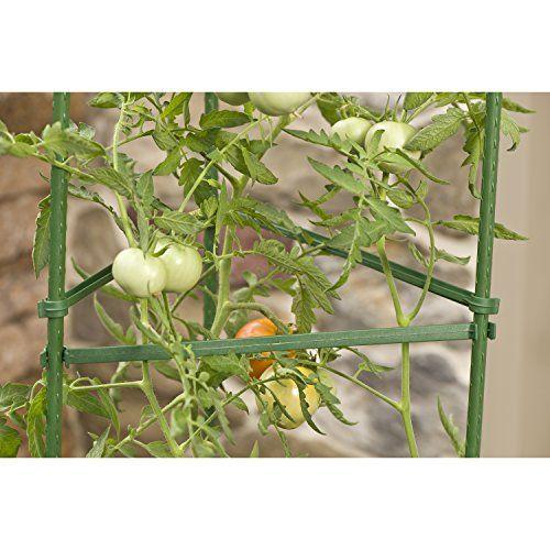 Gardeners-Blue-Ribbon-Ultomato-Tomato-Plant-Cage-0-4