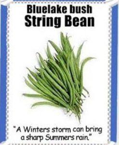 Heirloom-Garden-Vegetable-Seeds-NON-GMO-Easy-Growers-0-4