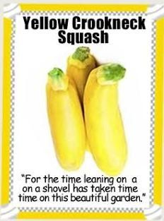 Heirloom-Garden-Vegetable-Seeds-NON-GMO-Easy-Growers-0-7