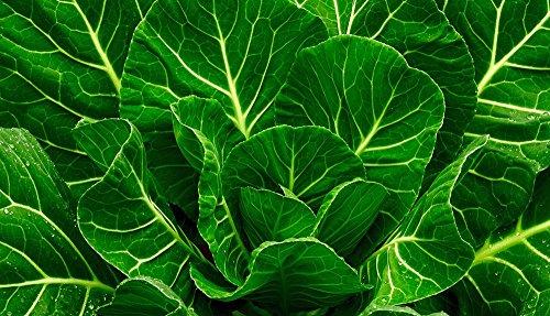 Heirloom-Vates-Collard-Green-Seed-0