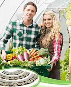 Heirloom-Vegetable-Seeds-Bulk-Pack-0-3