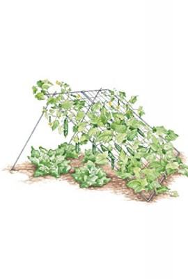 Large-Cucumber-Trellis-0