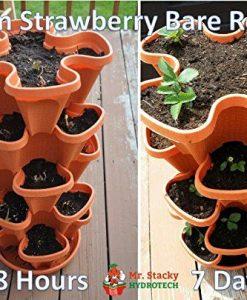 Mr-Stacky-5-Tier-Strawberry-Planter-Pot-5-Pots-0-3