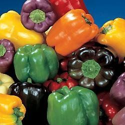 Organic-Rainbow-Bell-Pepper-40-Seeds-240mg-0