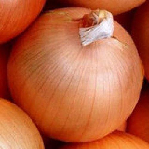 Organic-Yellow-Spanish-Sweet-Onion-100-Seeds-1144-Item-Upc636134973295-0