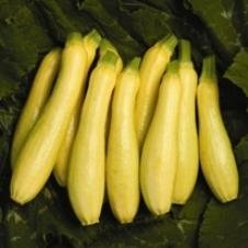 Seeds-of-Change-06000-Certified-Organic-Seed-Lioness-F1-Squash-0