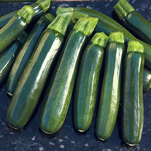 Seeds-of-Change-Certified-Organic-SummerSquash-0-1
