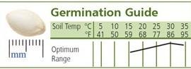 Squash-Summer-Slick-Pik-YS-26-D640GHB-Yellow-25-Hybrid-Seeds-by-Davids-Garden-Seeds-0-0