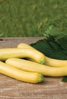 Squash-Summer-Slick-Pik-YS-26-D640GHB-Yellow-25-Hybrid-Seeds-by-Davids-Garden-Seeds-0