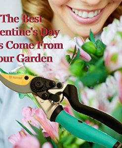 Steel-Bypass-Pruning-Shears-Titanium-Coated-Blades-Premium-Garden-Clippers-Gentle-Giant-Ergonomic-Rotating-Handle-Makes-Clipping-Fruit-Trees-Bushes-Easy-This-Garden-Tool-Helps-Avoid-Carpal-Tunnel-and–0-0