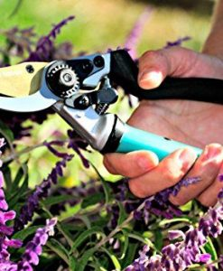 Steel-Bypass-Pruning-Shears-Titanium-Coated-Blades-Premium-Garden-Clippers-Gentle-Giant-Ergonomic-Rotating-Handle-Makes-Clipping-Fruit-Trees-Bushes-Easy-This-Garden-Tool-Helps-Avoid-Carpal-Tunnel-and–0-2