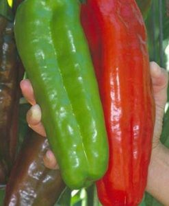 100-Count-Rare-Giant-Sweet-Marconi-Pepper-Seeds-0-0