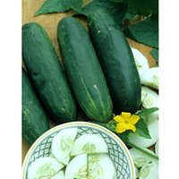 100seeds-Straight-Eight-Cucumber-an-All-american-Winner-in-1937-the-Best-Tasting-Cucumber-Ever-by-Seeds-and-Things-0-1