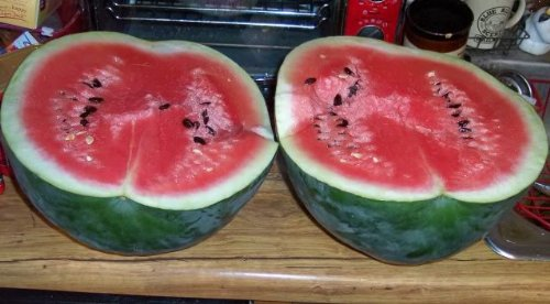 where to buy yellow watermelon in florida