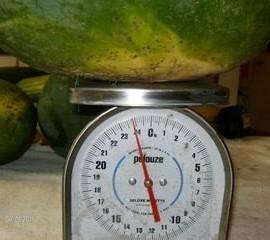 50-FLORIDA-GIANT-WATERMELON-Cannon-Ball-Black-Diamond-Citrullus-Fruit-Seeds-0-5