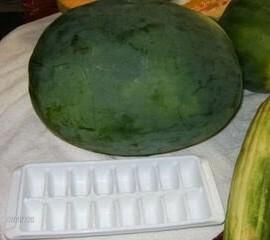 50-FLORIDA-GIANT-WATERMELON-Cannon-Ball-Black-Diamond-Citrullus-Fruit-Seeds-0-6