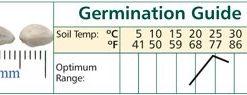 Artichoke-Green-Globe-DGS000654A-Green-50-Heirloom-Seeds-by-Davids-Garden-Seeds-0-0