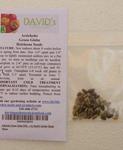 Artichoke-Green-Globe-DGS000654A-Green-50-Heirloom-Seeds-by-Davids-Garden-Seeds-0-5