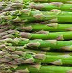 Asparagus-Seed-Precoce-Dargenteu-Heirloom-Non-Gmo-Organic-25-Seeds-0-0