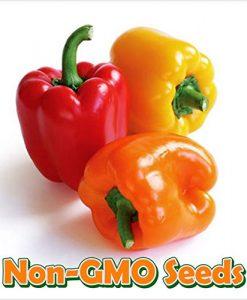 Bean-Bush-Dragons-Tongue-D3175-Purple-100-Organic-Heirloom-Seeds-by-Davids-Garden-Seeds-0-4