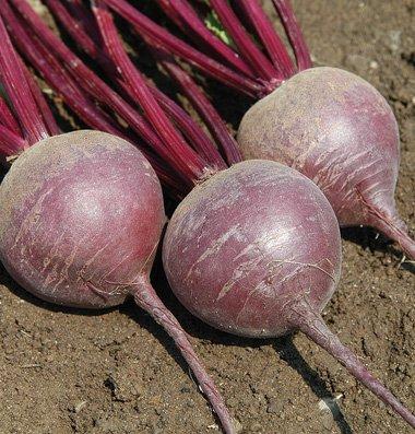 Beet-Merlin-D2758-Purple-500-Organic-Hybrid-Seeds-by-Davids-Garden-Seeds-0