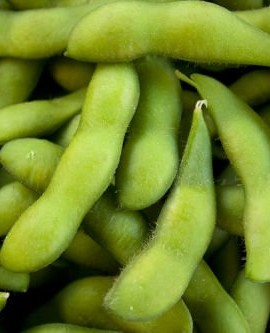 Besweet-Early-Edamame-Edible-Soybean-25-Seeds-Organic-Non-gmo-Japanease-Treat-0-0