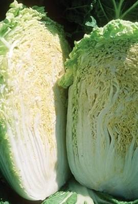 Cabbage-Chinese-Minuet-D2901-Green-200-Hybrid-Seeds-by-Davids-Garden-Seeds-0