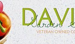 Cabbage-Early-Flat-Dutch-D22101-Green-50-Organic-Seeds-by-Davids-Garden-Seeds-0-0