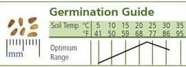 Chicory-Belgian-Endive-Totem-D2320END-Green-50-Hybrid-Organic-Seeds-by-Davids-Garden-Seeds-0-1